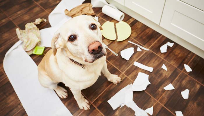 Don't reinforce your dogs' bad behavior
