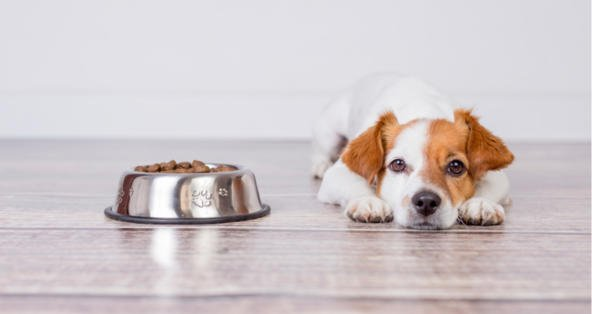 Train your dog to have his food
