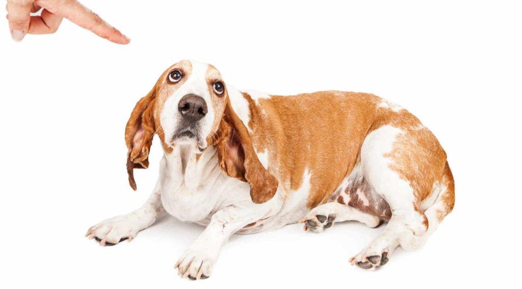 Stop punishing your dog