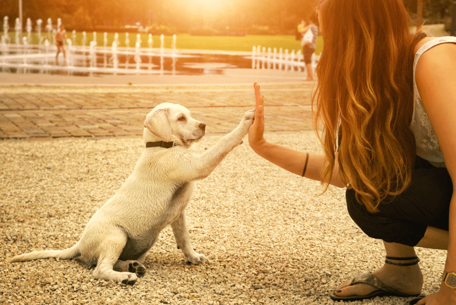 how regularly to train your dog